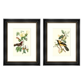 Dorma Maiya Set of 2 Framed Prints