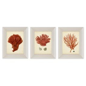 Dorma Set of 3 Coral Framed Prints