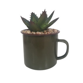 Keepers Lodge Succulent in Green Mug