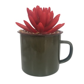 Keepers Lodge Red Succulent in Mug