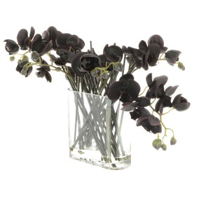 5A Fifth Avenue Black Phalaenopsis in Glass