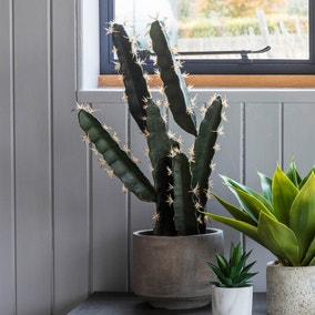Set of 2 Large Potted Cactus Plants