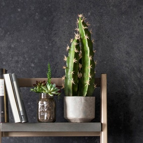 Set of 2 Medium Potted Cactus Plants