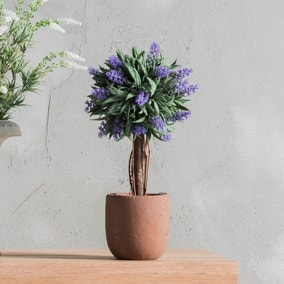 Set of 4 Potted Lavender Ball Trees