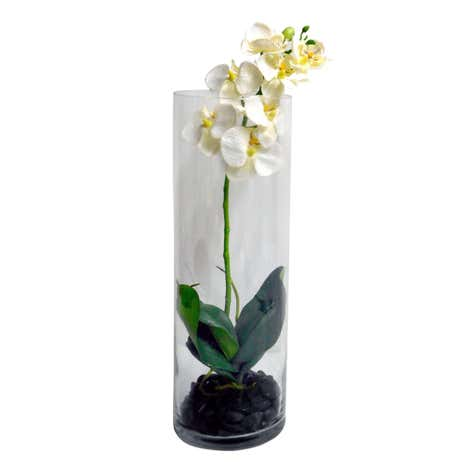 5A Fifth Avenue Orchid in Cylinder Vase