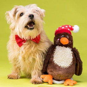 Christmas 2 in 1 Robin Dog Toy with Bow Tie