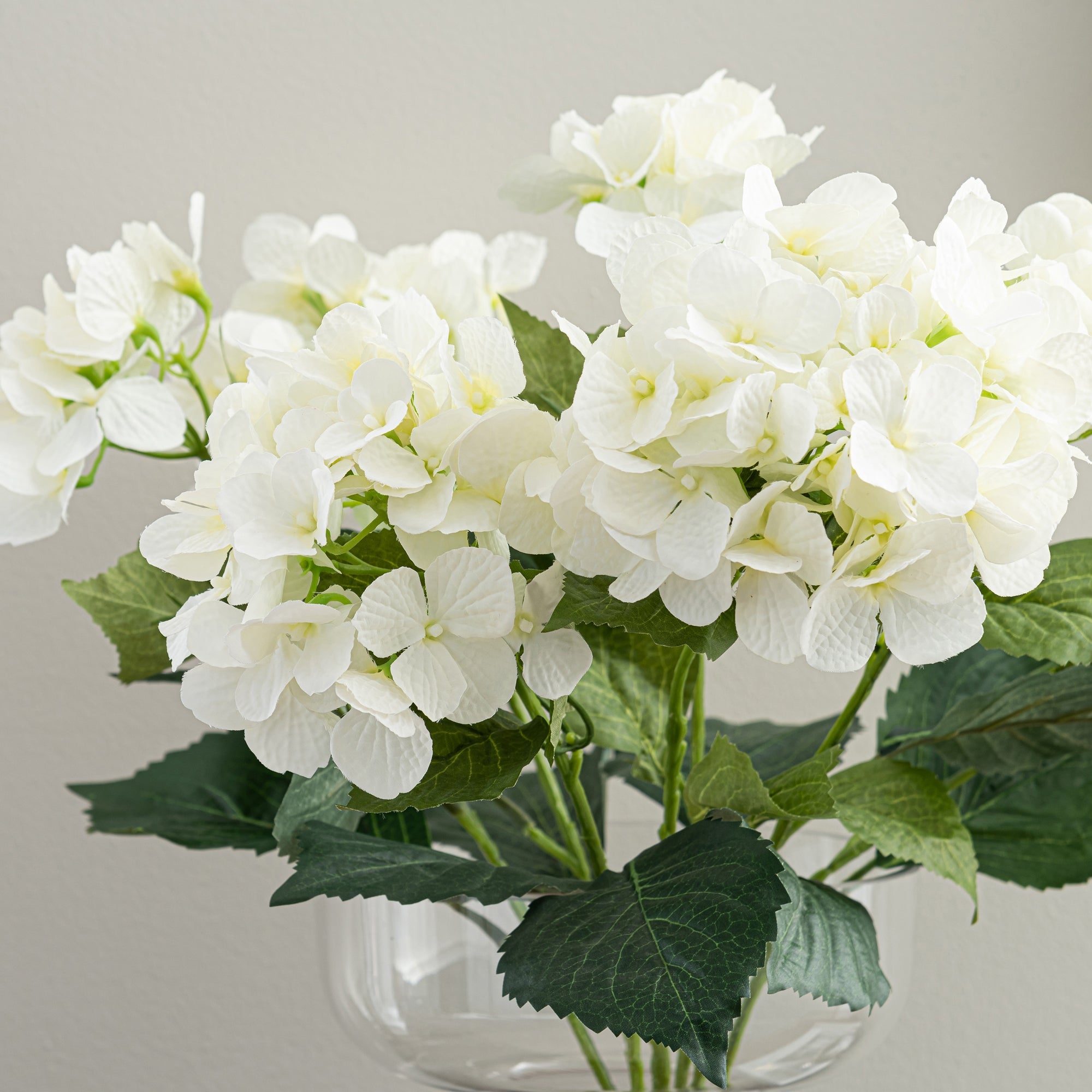 Image of Cream Hydrangea Bush Cream