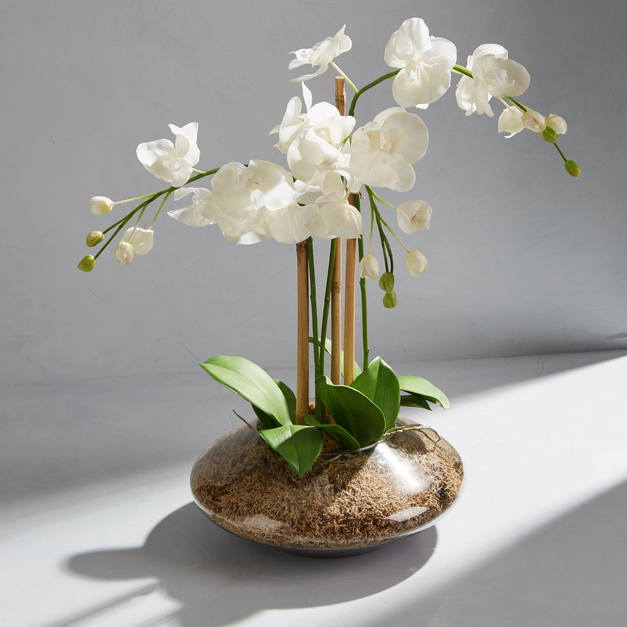 Dorma Large Orchid in Glass Bowl White